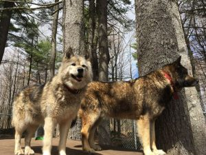 Runs with Wolves Sanctuary